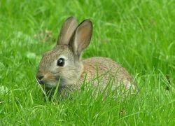Крольчиха спасла жизнь своим хозяевам