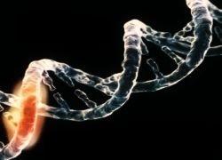 Меланому вызывают генетические мутации