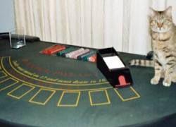 Столичные казино массово сокращают персонал