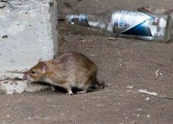 На дворе XXI век, а в Москве - вши и крысы