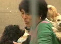 Пенсионерка из Китая приютила 300 бездомных животных