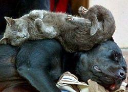Правда ли, что собаки полезнее кошек?