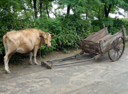 Россияне отказываются от колес