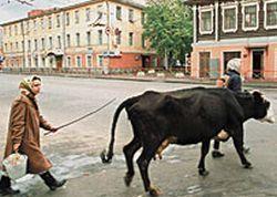 Аман Тулеев раздает безработным кроликов и коров