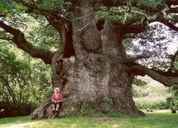 Современные деревья растут быстрее