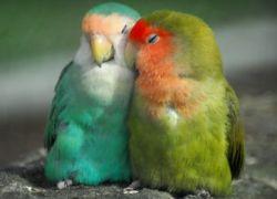 Гормон любви повышает привлекательность незнакомцев