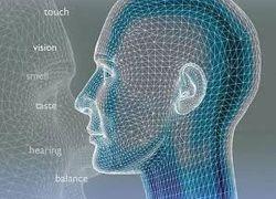 Осязательные ощущения влияют на визуальное восприятие