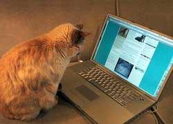 В Twitter появились коты-блоггеры