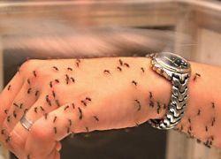 Разработано новое лекарство от малярии
