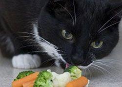 В Великобритании появился кот-вегетарианец