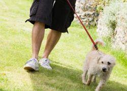 Владельцев собак в Испании обязали их выгуливать