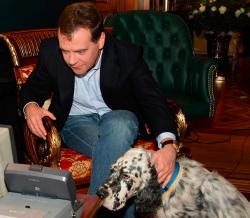 Онищенко предложил убивать собак в Подмосковье