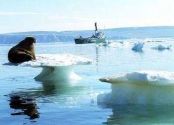 Туризм в Антарктику ограничат