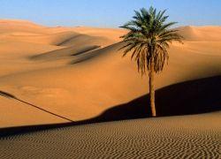 """Ученые обнаружили механизм \""""мегазасух\"""" в Сахаре"""