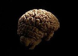 Найдена область мозга, отвечающая за выбор места отдыха