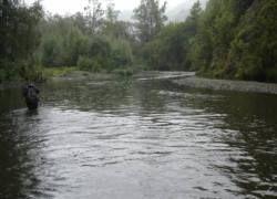 Сахалинскую реку залило нефтью