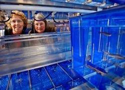Генетики обнаружили молекулы, ответственные за глухоту