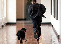 Собака Обамы покусала людей в Белом доме