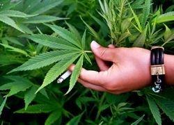 В США стартовала кампания за легализацию марихуаны