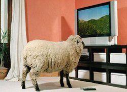 До каких пор телевидение будет делать из нас дураков?