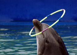 Для Московского дельфинария построят новое здание