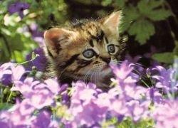 Аллергия: в чем причины и каково лечение