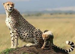Национальные парки Кении остаются без животных
