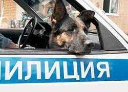 Во Владикавказе собака приняла рыбу за взрывчатку