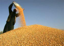 Россия побила собственный рекорд по экспорту зерна