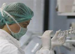 Создание вакцины против свиного гриппа займет год