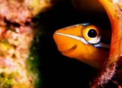 В США созданы рыбы-самцы, способные метать икру