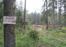 Безработных москвичей отправят на лесоповал