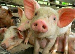 Мексике дадут $3 млрд на борьбу со свиным гриппом