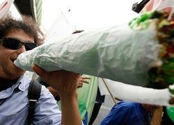 Марихуана не наркотик, а лекарственное растение?