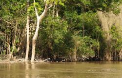 От ливневых дождей в Амазонии 140 тысяч пострадавших