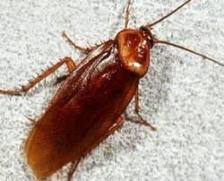 Куда исчезли тараканы?