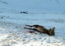 Делом алтайских браконьеров займется прокуратура РФ?