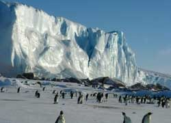 В Антарктике зафиксировано снижение температуры