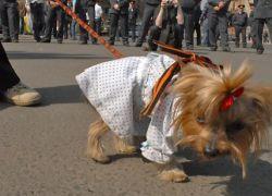 Новость на Newsland: Георгиевская ленточка: символ победы или шнурки?