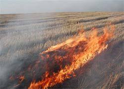 Нужно ли сжигать весной прошлогоднюю траву