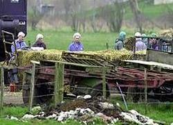 Фермеры Англии страдают от чернобыльской радиации