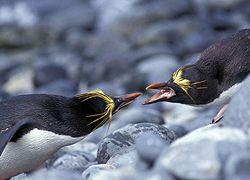 Раскрыт секрет пингвинов