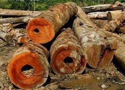 Польза от биотоплива уравновешивается вырубкой лесов