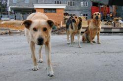 На столичных улицах -  более 20 тысяч бродячих животных