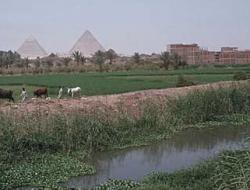 В Египте 24 человек приговорили к смертной казни
