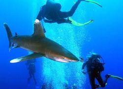В Австралии туристов развлекают дайвингом с акулами