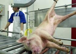 Импортной свинине в России осталось жить три года