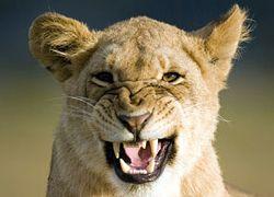 Самые забавные случаи побега из зоопарков