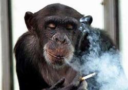 Курение увеличивает риск инфаркта и инсульта