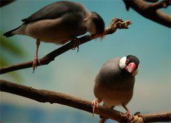 Современные птицы стали петь медленнее